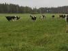 Tutustumiskäynti maatilalle